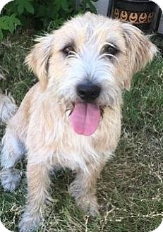 Terrier (Unknown Type, Medium) Mix Dog for adoption in Yorba Linda, California - Kelley