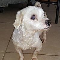 Adopt A Pet :: Snowflakes - Gretna, FL
