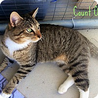 Adopt A Pet :: Count Olaf - Smithtown, NY