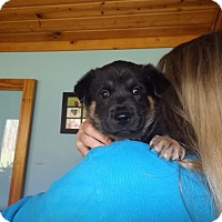 Adopt A Pet :: Wolfy - Quincy, IN