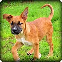 Adopt A Pet :: Camille - Glastonbury, CT