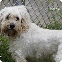 Adopt A Pet :: Glow - Camden, DE