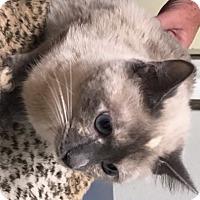 Adopt A Pet :: Beauty - Casa Grande, AZ