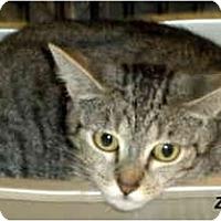 Adopt A Pet :: Zoe - Jacksonville, FL