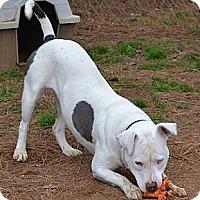 Adopt A Pet :: Lilly - Athens, GA