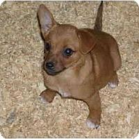 Adopt A Pet :: Lake - Glastonbury, CT