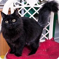 Adopt A Pet :: Minnie - Shelton, WA
