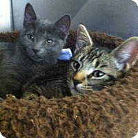 Adopt A Pet :: Sparkle - Trevose, PA