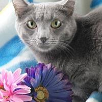 Adopt A Pet :: Sylvie - Dundee, MI