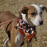 Adopt A Pet :: Bristol - Homewood, AL