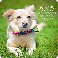 Adopt A Pet :: Peggy Sue - Fort Valley, GA