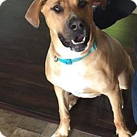 Adopt A Pet :: Zod  COURTESY POST - Chesterfield, MI