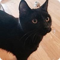 Adopt A Pet :: Jasper - Colorado Springs, CO
