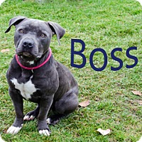 Adopt A Pet :: Boss - Hamilton, MT