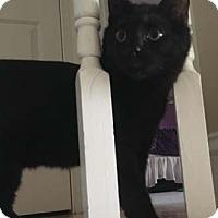 Adopt A Pet :: Tara - Merrifield, VA