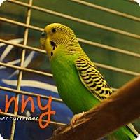Adopt A Pet :: Sunny - Hamilton, ON
