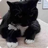 Adopt A Pet :: TYBEE - Rosenberg, TX