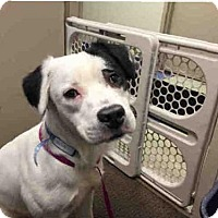 Adopt A Pet :: BINGO - Rockford, IL