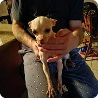 Adopt A Pet :: Teresa - Union Grove, WI