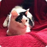 Adopt A Pet :: Timmy - Simpsonville, SC