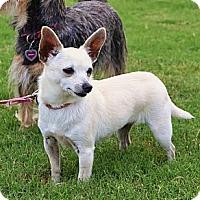 Adopt A Pet :: *Pippy - Westport, CT