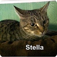 Adopt A Pet :: Stella - Medway, MA