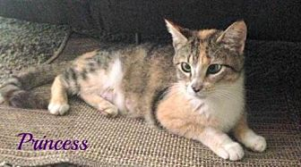 Domestic Shorthair Cat for adoption in Knoxville, Tennessee - Princess-Female-SPONSORED ADOPTION FREE