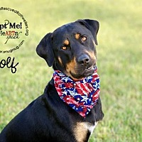 Adopt A Pet :: Wolf - White Hall, AR