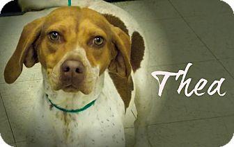 Beagle Mix Dog for adoption in Defiance, Ohio - Thea