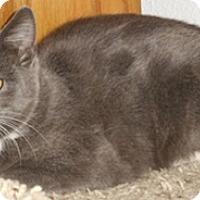 Adopt A Pet :: Tinsel - North Highlands, CA