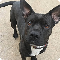 Adopt A Pet :: Graham - Wichita, KS