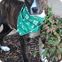 Adopt A Pet :: Cliff - East Randolph, VT