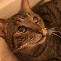 Adopt A Pet :: Teddy - Tampa, FL