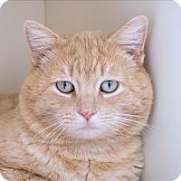 Adopt A Pet :: Theo - San Luis Obispo, CA