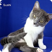 Adopt A Pet :: Sushi - Carencro, LA