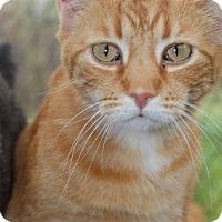 Adopt A Pet :: Leo - Columbia, TN