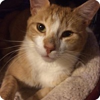 Adopt A Pet :: Mr. Greene - Berkeley Hts, NJ