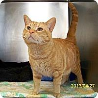 Adopt A Pet :: Cash - Dover, OH