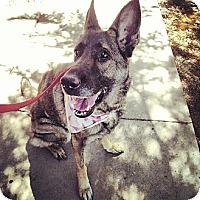 Adopt A Pet :: Susie Q - Scottsdale, AZ