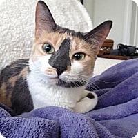 Adopt A Pet :: Aralyn - Naples, FL