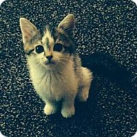 Adopt A Pet :: Sky - Kirkwood, DE