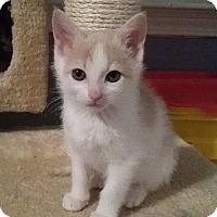 Adopt A Pet :: Tinya - McDonough, GA