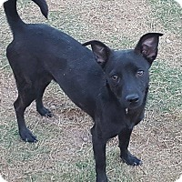 Adopt A Pet :: Mercedes - Las Cruces, NM