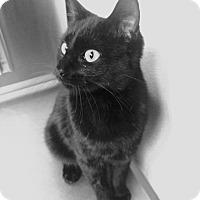 Adopt A Pet :: Violet - Denton, TX