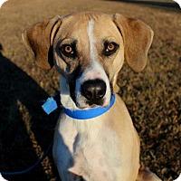 Adopt A Pet :: Copper - Dillsburg, PA