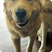 Adopt A Pet :: Bumper - BIRMINGHAM, AL