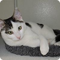 Adopt A Pet :: Brock - Massapequa, NY