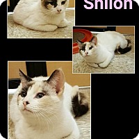 Adopt A Pet :: Shiloh - North Richland Hills, TX