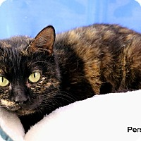Adopt A Pet :: Persia - Carencro, LA