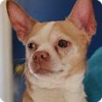 Adopt A Pet :: Wescott - Columbia, SC